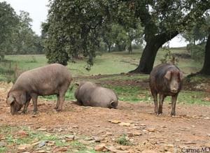 pernil cerdos